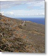 Wiliwili Flowers - Erythrina Sandwicensis - Kahikinui Maui Hawaii Metal Print