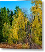 Willow Will Metal Print