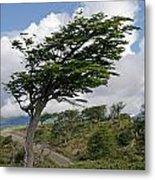 Wind-bent Tree In Tierra Del Fuego Metal Print