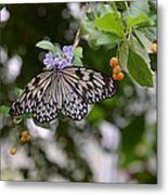Wings Of Beauty Metal Print