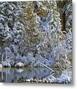 Winter Scene Metal Print by Pat Now