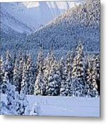 Winter Scenic Of Snowcovered Spruce Metal Print