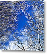 Winter Trees And Blue Sky Metal Print