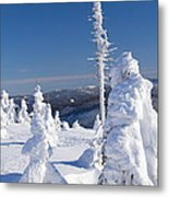 Winter View Of Snow Covered Trees Metal Print