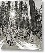Winter Wonderland - Badger Pass In Yosemite National Park Metal Print