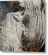 Wise One,elephant  Metal Print