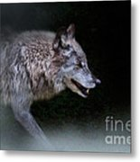 Wolf On The Prowl Metal Print