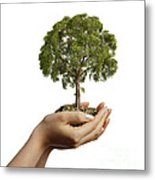 Womans Hands Holding Soil With A Tree Metal Print
