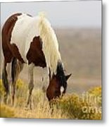 Wyoming Drifter Metal Print