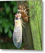 Year Of The Cicada Metal Print