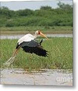 Yellow-billed Stork Mycteria Ibis Metal Print