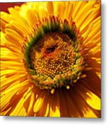 Yellow Flower Metal Print by Joyce Woodhouse