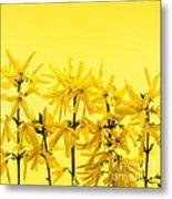 Yellow Forsythia Flowers Metal Print