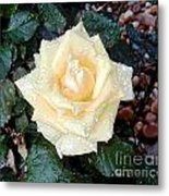 Yellow Rose At Dawn Metal Print