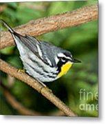 Yellow-throated Warbler Metal Print