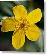 Yellow Wood Anemone Metal Print