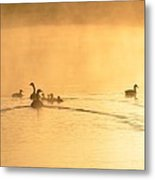 You Better Get Your Ducks In A Row Metal Print