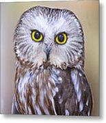 Young Saw-whet Owl Metal Print