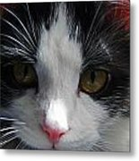 Yue Up Close Metal Print