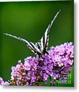 Zebra Swallowtail Butterfly Square Metal Print