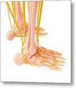 Human Foot Nervous System Metal Print
