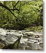 Jungle Stream Metal Print