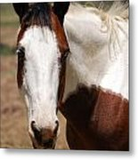 Paint Mare Metal Print by Thea Wolff