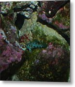 Tropical Fish Metal Print