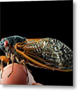 A Detailed View Of A Brood II Cicada Metal Print
