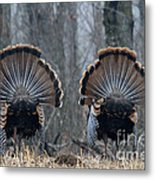 Jake Eastern Wild Turkeys Metal Print by Linda Freshwaters Arndt