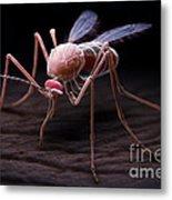 Anopheles Mosquito Metal Print