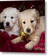 Festive Puppies Metal Print by Angel  Tarantella
