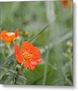 Scarlet Avens Orange Wild Flower Metal Print