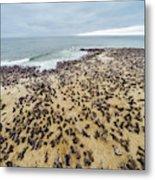 Cape Cross, Namibia, Africa - Cape Fur Metal Print