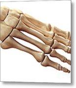 Foot Bones Metal Print
