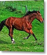 The Bay Horse  Metal Print