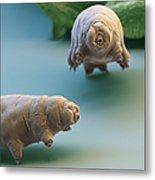 Water Bear Metal Print by Eye of Science and Science Source