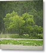1307-4983 Rainy Lake Ludwig Metal Print by Randy Forrester