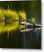 131005b-029 Forest Pond 2 Metal Print