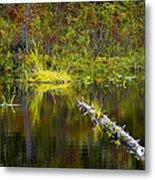 131005b-052 Forest Marsh 2 Metal Print