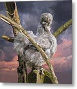 14. Cuckoo Bush Metal Print
