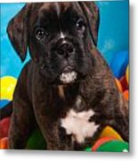 little Boxer dog puppy Metal Print