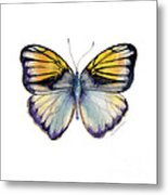 14 Pieridae Butterfly Metal Print