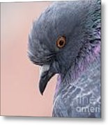 Rock Dove Metal Print
