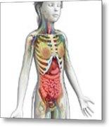 Human Anatomy Metal Print