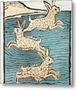 1491 Sea Hares From Hortus Sanitatis Metal Print