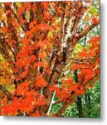 Fall Explosion Of Color Metal Print