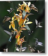 15 Hummingbirds Metal Print