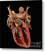 Heart Anatomy Metal Print