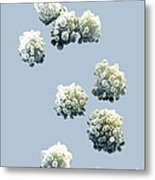 Lymphocytes Undergoing Apoptosis Metal Print